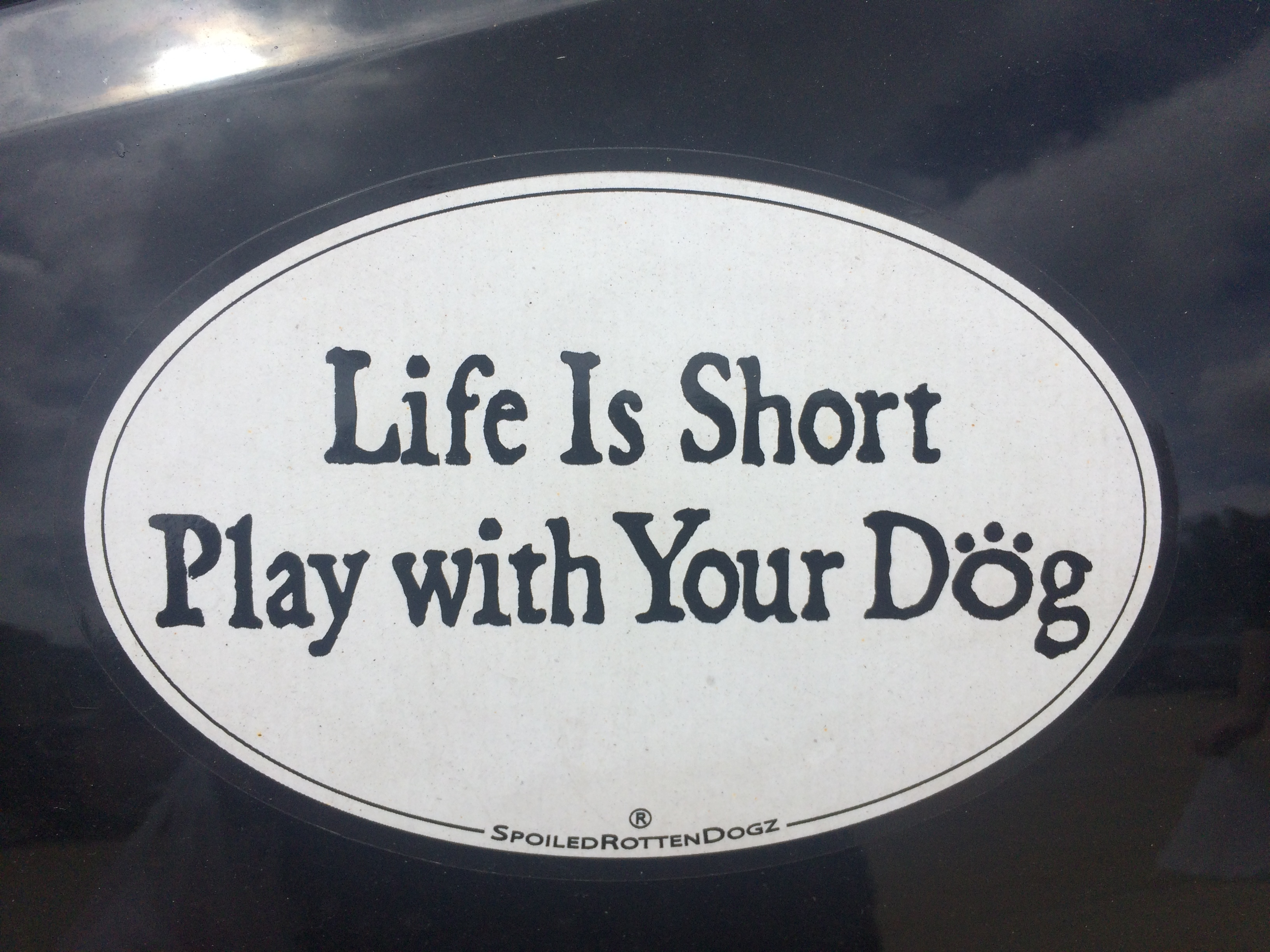Bumper Sticker_Life Is Short Play with your Dog
