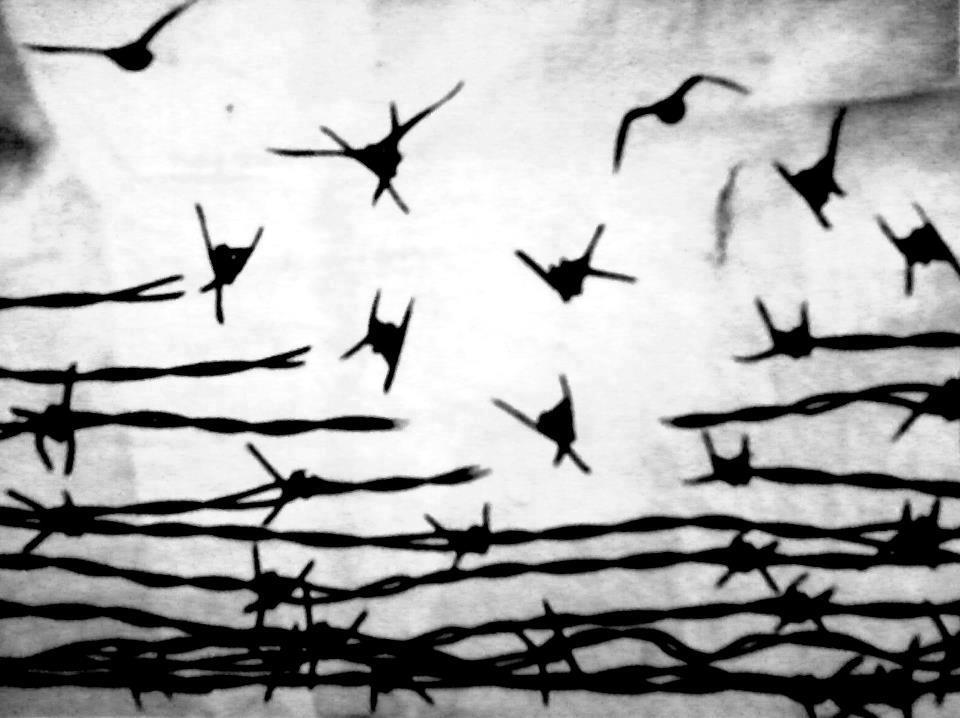 freed barbed wire
